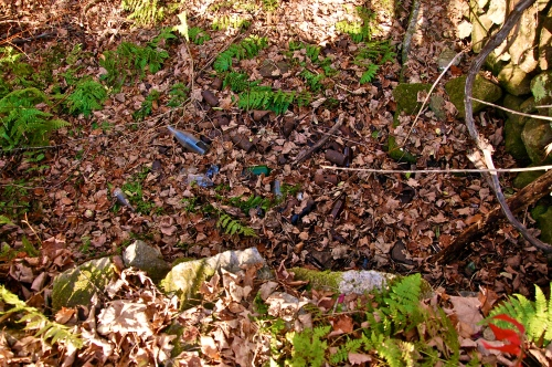 "Sadly, a common sight to many cellar holes in the Quabbin. These beer bottles are dated enough to safely say that they've been here for ""decades."""