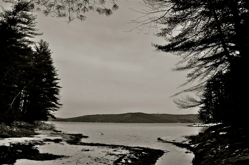 Perhaps a nostalgic view of Quabbin, showing the mouth of Gate Brook